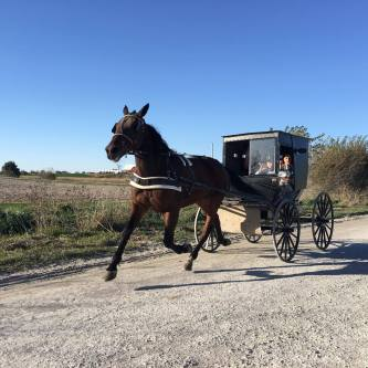An Amish family ride their horse and buggy down a dirt road in Kalona, Iowa.